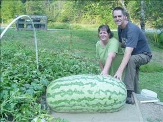 how much does a watermelon weigh